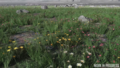 Microtech-fields-biome-04.png