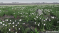 Microtech-fields-biome-02.png