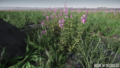 Microtech-fields-biome-05.png